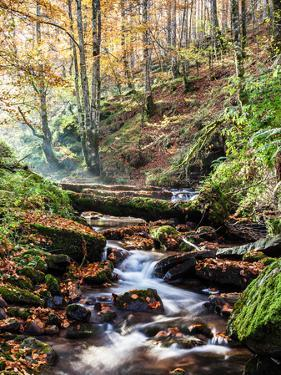 Stream Flowing through Autumn Forest by Pablo Garcia Oses