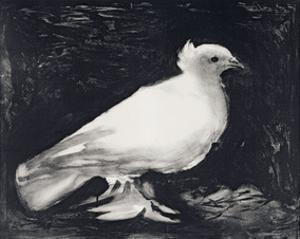 Dove, 1949 by Pablo Picasso