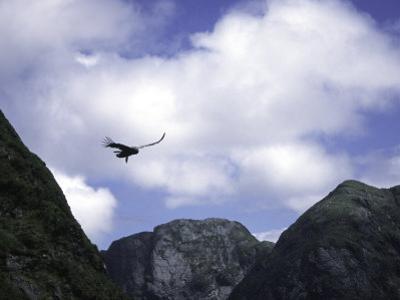 A Condor Flying Through the Mountains