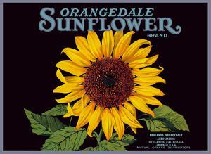 Orangedale Sunflower Brand - California Oranges by Pacifica Island Art