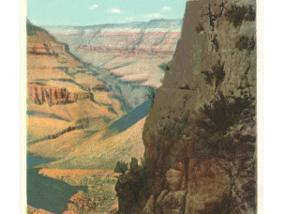 Pack Animals on Trail in Grand Canyon