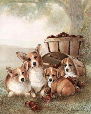 Pack of Corgis (Apples) Art Print Poster