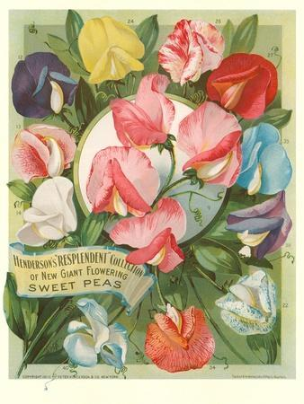 https://imgc.allpostersimages.com/img/posters/packet-of-sweet-pea-seeds_u-L-POD6E60.jpg?p=0