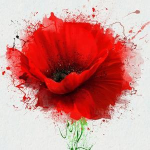 Beautiful Red Poppy, Closeup on a White Background, with Elements of the Sketch and Spray Paint, As by Pacrovka