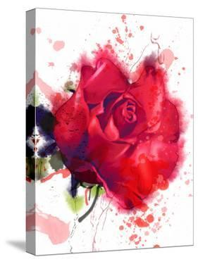 Red Rose. Watercolor by Pacrovka