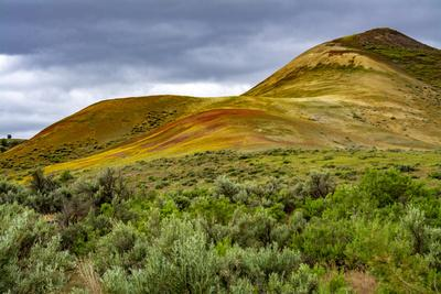 https://imgc.allpostersimages.com/img/posters/painted-hills-and-golden-bee-plants_u-L-Q1H24QT0.jpg?artPerspective=n
