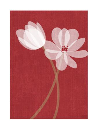Pair of Translucent White Flowers on Red Background