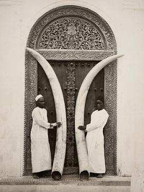 Pair of Tusks, Zanzibar