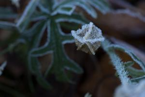 Frozen flower seed pod on a natural green background by Paivi Vikstrom