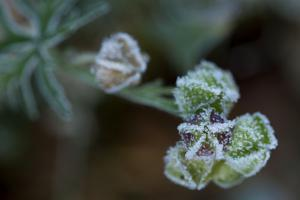 Hoarfrost crystals on dried flower seed pods, blur background by Paivi Vikstrom