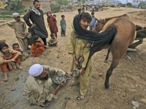 Pakistan Youth, Holds a Horse's Hoof While a Man Prepares to Place a New Shoe