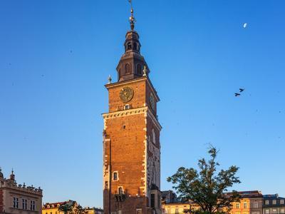 Pigeons in the Morning Krakow