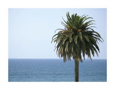 https://imgc.allpostersimages.com/img/posters/palm-at-moonlight-beach_u-L-F8D2CZ0.jpg?p=0