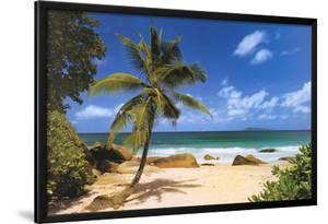 Palm Beach (Tropical Landscape Photo) Art Poster Print