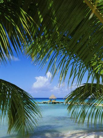 https://imgc.allpostersimages.com/img/posters/palm-fronds-and-beach-rangiroa-atoll-tuamotu-archipelago-french-polynesia-south-pacific-islands_u-L-P2R33D0.jpg?p=0