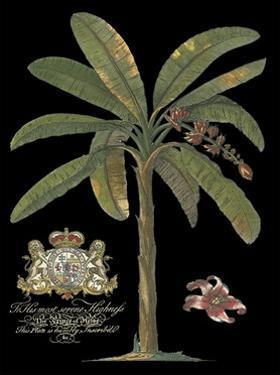 Palm on Black II