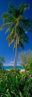 Palm Tree and Plants on the Beach, Cat Island, Bahamas