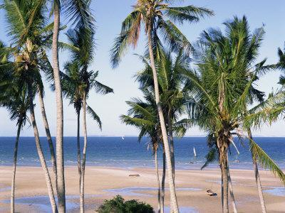 https://imgc.allpostersimages.com/img/posters/palm-tree-and-tropical-beach-on-the-coast-of-mozambique-africa_u-L-P7X9IK0.jpg?p=0