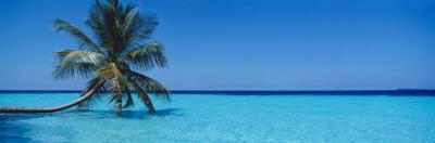 Palm Tree in the Sea, Maldives