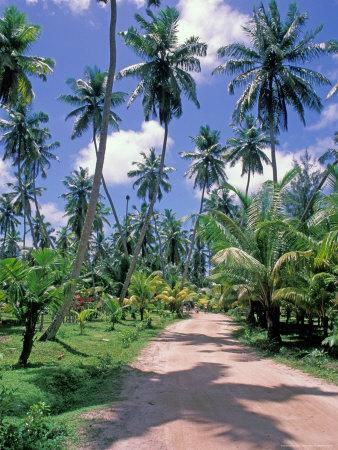 https://imgc.allpostersimages.com/img/posters/palm-tree-lined-road-of-l-union-estate-plantation-seychelles_u-L-P588440.jpg?p=0