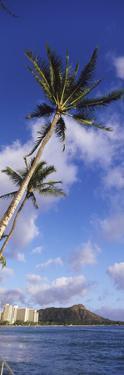 Palm Tree on the Beach, Diamond Head, Waikiki Beach, Honolulu, Oahu, Hawaii, Usa
