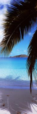 Palm Tree on the Beach, Maho Bay, Virgin Islands National Park, St. John, Us Virgin Islands