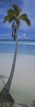 Palm Tree on the Beach, One Foot Island, Aitutaki, Cook Islands