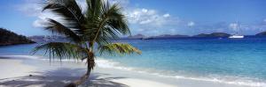 Palm Tree on the Beach, Salomon Beach, Virgin Islands National Park, St. John, US Virgin Island