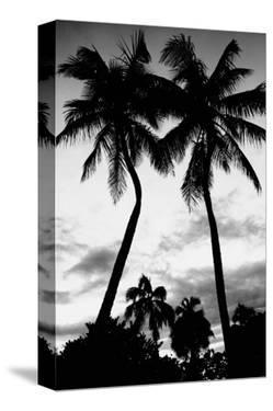 Palm Tree Silhouettes, Naples, Florida