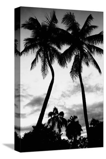 Palm Tree Silhouettes, Naples, Florida--Stretched Canvas Print