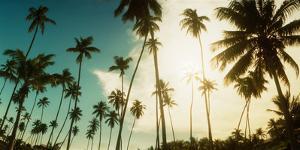 Palm Trees Along the Beach in Morro De Sao Paulo, Tinhare, Cairu, Bahia, Brazil