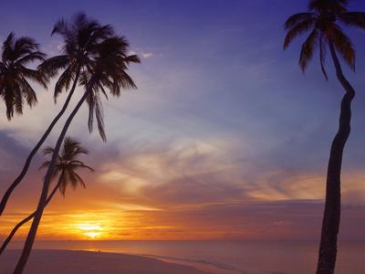 https://imgc.allpostersimages.com/img/posters/palm-trees-and-ocean-at-sunset-maldives-indian-ocean-asia-no-10_u-L-PFNYOY0.jpg?p=0