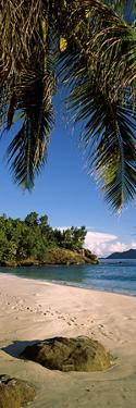 Palm Trees and Rocks on a Small Secluded Beach on North Island, Seychelles