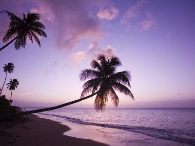 https://imgc.allpostersimages.com/img/posters/palm-trees-at-sunset-coconut-grove-beach-at-cade-s-bay-nevis-caribbean_u-L-P245IV0.jpg?p=0