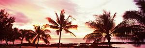Palm Trees at Sunset, Waikiki Beach, Honolulu, Oahu, Hawaii, USA