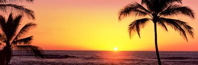 https://imgc.allpostersimages.com/img/posters/palm-trees-at-the-coast-at-sunset-waikoloa-hawaii-county-hawaii-usa_u-L-Q12Q2B00.jpg?p=0