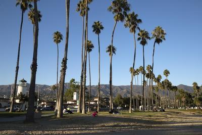 https://imgc.allpostersimages.com/img/posters/palm-trees-behind-beach_u-L-PQ8TZZ0.jpg?p=0