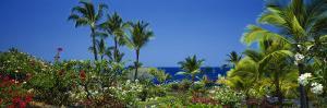 Palm Trees in a Garden, Tropical Garden, Kona, Hawaii, USA