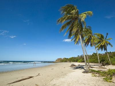 https://imgc.allpostersimages.com/img/posters/palm-trees-on-playa-guiones-beach-nosara-nicoya-peninsula-guanacaste-province-costa-rica_u-L-PFNNNA0.jpg?p=0