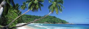 Palm Trees on the Beach, Anse Severe, La Digue Island, Seychelles