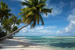 Palm Trees on the Beach, Bora Bora, Society Islands, French Polynesia