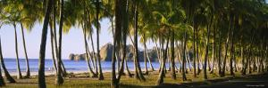 Palm Trees on the Beach, Carrillo Beach, Nicoya Peninsula, Guanacaste Province, Costa Rica