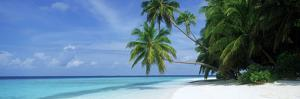 Palm Trees on the Beach, Fihalhohi Island, Maldives
