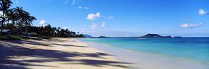 Palm Trees on the Beach, Lanikai Beach, Oahu, Hawaii, USA