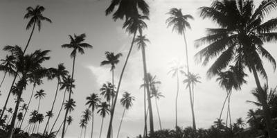 Palm Trees on the Beach, Morro De Sao Paulo, Tinhare, Cairu, Bahia, Brazil