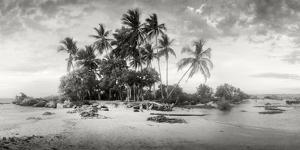 Palm Trees on the Beach, Morro De Sao Paulo, Tinhare, Cairu, Bahia, Brazil