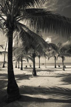 Palm Trees on the Beach, Playa Luquillo Beach, Luquillo, Puerto Rico