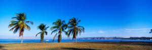 Palm Trees on the Beach, Puerto La Cruz, Anzoategui State, Venezuela