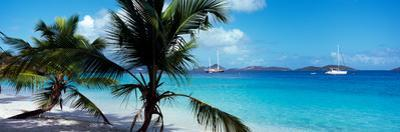 Palm Trees on the Beach, Salomon Beach, Virgin Islands National Park, St. John, Us Virgin Islands