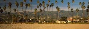 Palm Trees on the Beach, Santa Barbara, California, USA